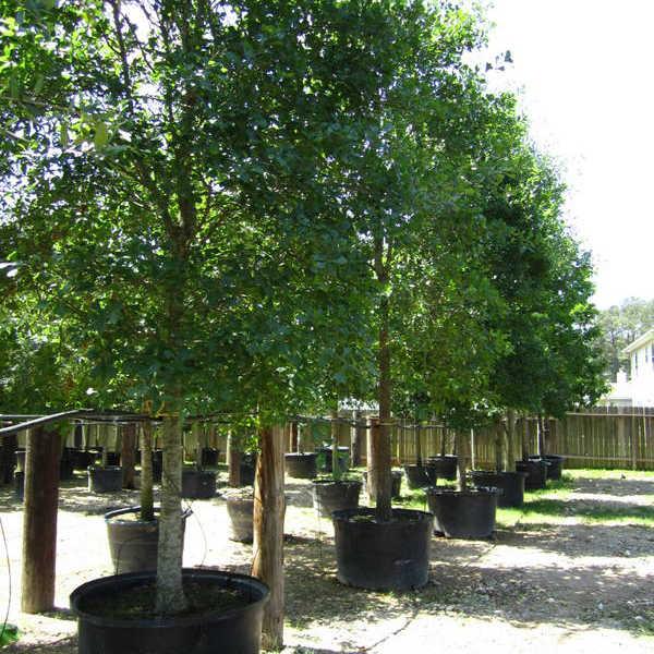 wild-bill-tree-utah-service-tree-planting
